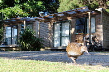 Weka outside cabin - Orongo Bay Holiday Park
